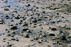 Stones on the beach at low tide Stock Image
