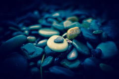 Stones on the beach. Photo taken on the coast of the Black sea Royalty Free Stock Photography