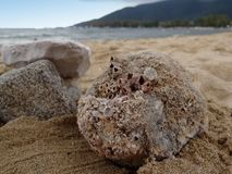 Stones on the beach. A stone covered with corals and some rocks on sandy beach, closeup royalty free stock image