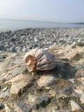 Stones on the Black Sea coast. Stones on the Black Sea royalty free stock photo
