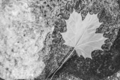 Abstract autumn black and white stones stock photography