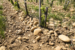 Stones Of Chateauneuf de Pape Stock Image