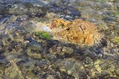 Stones in clear sea water. Splash of water royalty free stock photo