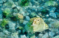 Stones in clear water Stock Photography