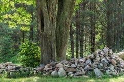 Stones close the tree Royalty Free Stock Photo
