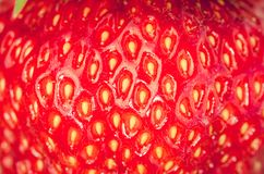 Stones close up fresh ripe juicy strawberry/stones close up fresh ripe juicy strawberry. Dessert. Gourmet food royalty free stock photo