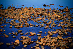 Stones in the coastal water Stock Photography