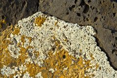 stones at the coastline covered by lichen Stock Photos