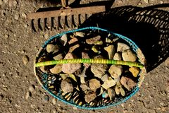 Stones collected in the basket. Rake royalty free stock photography