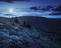 Stones and conifer trees on hillside at night Royalty Free Stock Photo