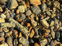 Stones coral on the seashore Royalty Free Stock Images