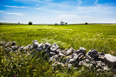 Stones in the country Stock Image