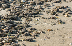 Stones covered with acorn barnacles from close Stock Image
