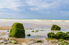 Stones covered by algae lying on the seashore, Cote d'Opale, France Stock Photos