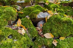 Stones covered with green moss and with some dry leaves in spring. Natural background. Stones covered with green moss and with some dry leaves in springtime Stock Images