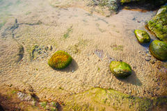 Stones covered green seaweed Stock Images