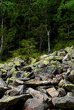 Stones covered with moss and lichen. Grey stone covered with moss and lichen in mountains royalty free stock photos