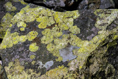 Stones covered with moss and lichen. Grey stone covered with moss and lichen in mountains royalty free stock images