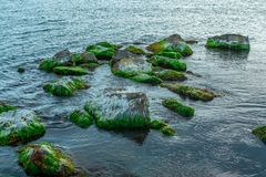Stones covered with moss in a sea on a summer day, seascape royalty free stock photo