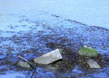 Moss covered stones in the tide. Stones covered in moss with the tide coming in around them taken in Bray Harbour, Co Wicklow, Ireland Stock Photos