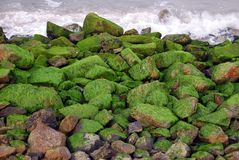 Stones covered with seawee Stock Images