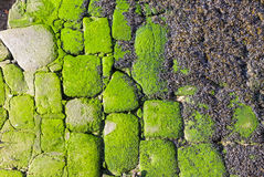 Stones covered with a seaweeds on the coast Stock Image