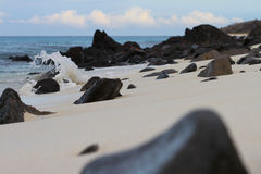 Stones and Crabs. This Galapagos shoreline is scattered with weathered stones and skiddish crabs Stock Images