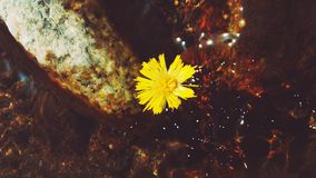 Stones and dandelion under the water Stock Images