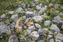 Stones. Of different sizes, different colors Royalty Free Stock Photo