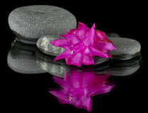 Stones with drops and red flower Stock Photography
