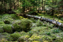 Stones and fallen tree covered with moss Stock Photography
