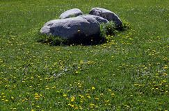 Stones at the field Royalty Free Stock Image