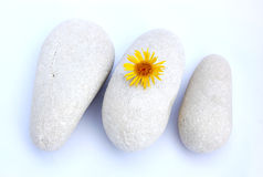 Stones and flower Stock Photos