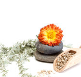 Stones and flower. Flower and stones isolated on a white background Royalty Free Stock Images