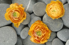 Stones and flower Royalty Free Stock Photos