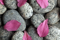Stones with flower petals. Smooth stones with flower petals Stock Photo