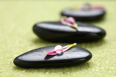 Stones with flower petals Royalty Free Stock Image