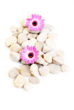 Stones and flowers Royalty Free Stock Photo