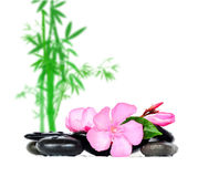 Stones flowers. Stones and flowers on bamboo background royalty free stock photo