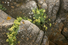 Stones and flowers. Rocks, stones, flowers, life, resistance, optimism, ecology, background Stock Photo