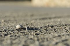 Stones within the focal plane and depth of field. Floor with stones within the focal plane and depth of field Royalty Free Stock Photos