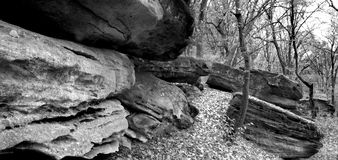 Stones in forest. Black and white image of stones in forest Royalty Free Stock Image