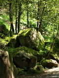 Stones in a forest. A relaxing image of some stones full of musk in a mountain path Royalty Free Stock Photography