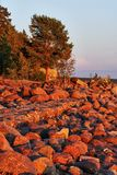 Stones and forest in the rays of the red sun at sunset. Coast of the Gulf of Finland in the Leningrad region of Russia. The outgoing sun painted the shore with Stock Image