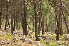 Stones in forest, Sicily, Italy Royalty Free Stock Image