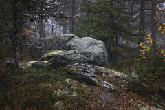 Stones in the forest. Some stones between trees in the autumn forest Stock Photography