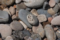 Stones of forms and colors. Group of stones with different forms colors and holes in the beach royalty free stock image