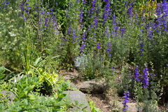 Stones garden Royalty Free Stock Photo