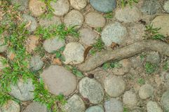 Stones, grass and plant root on ground, used as Background and Texture. Stones, grass and plant root on ground, Background and Texture, take photography in stock images
