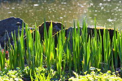Stones and grass Royalty Free Stock Photo